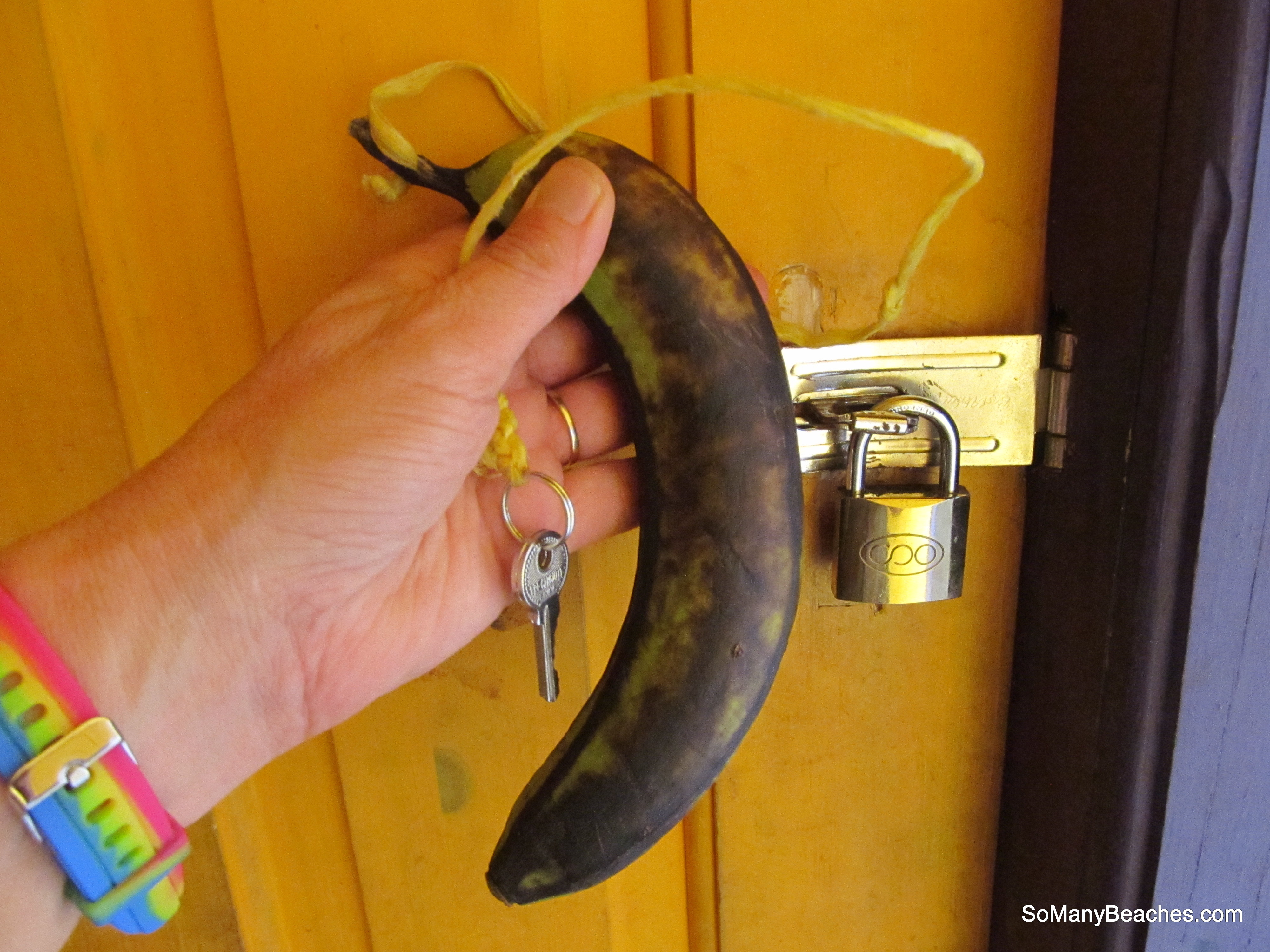 bathroom key in the jungle is an actual banana